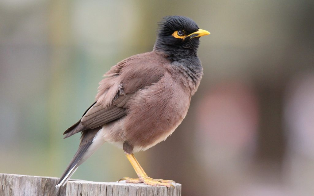 bird food medical