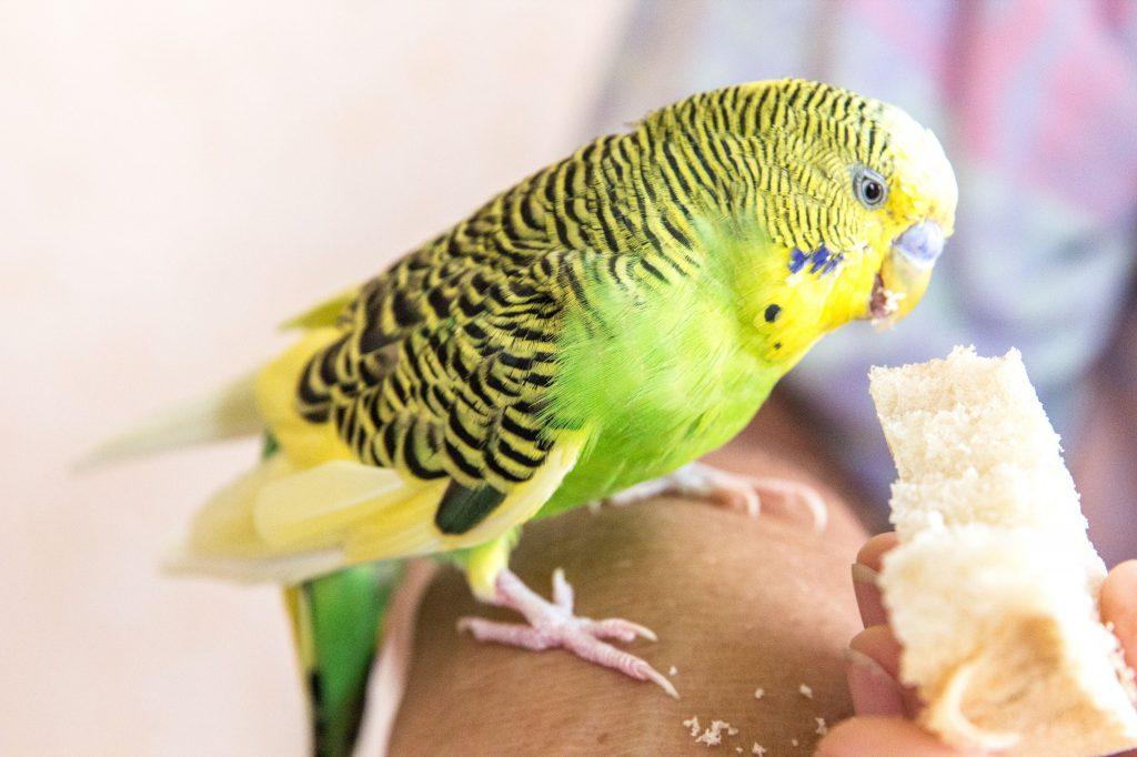 birds medical