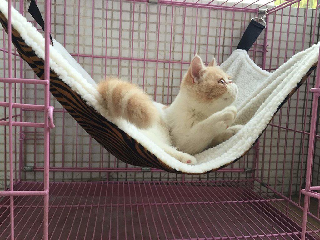 cat-accessories