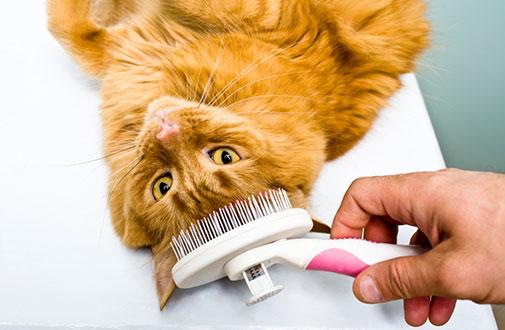 cat-care_cat-grooming