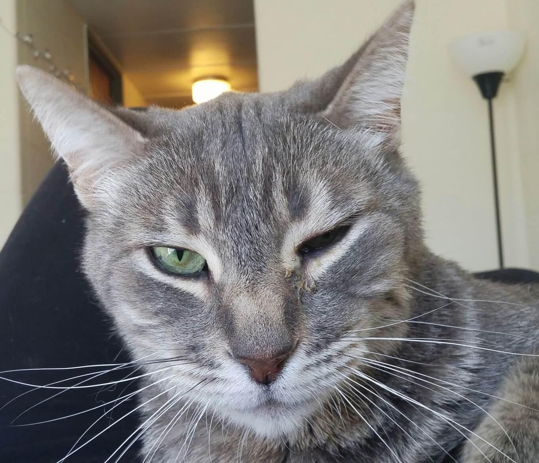 cat eyes injury