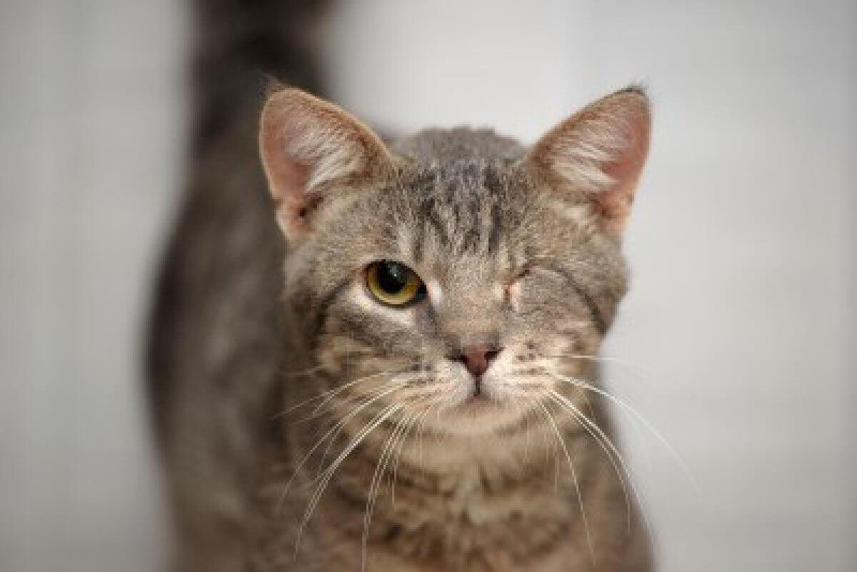 cat-head-injury-prevention