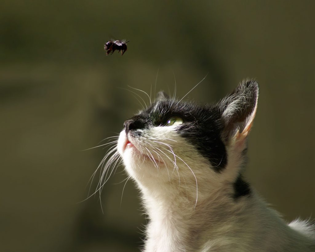 cat-insect-bites-information