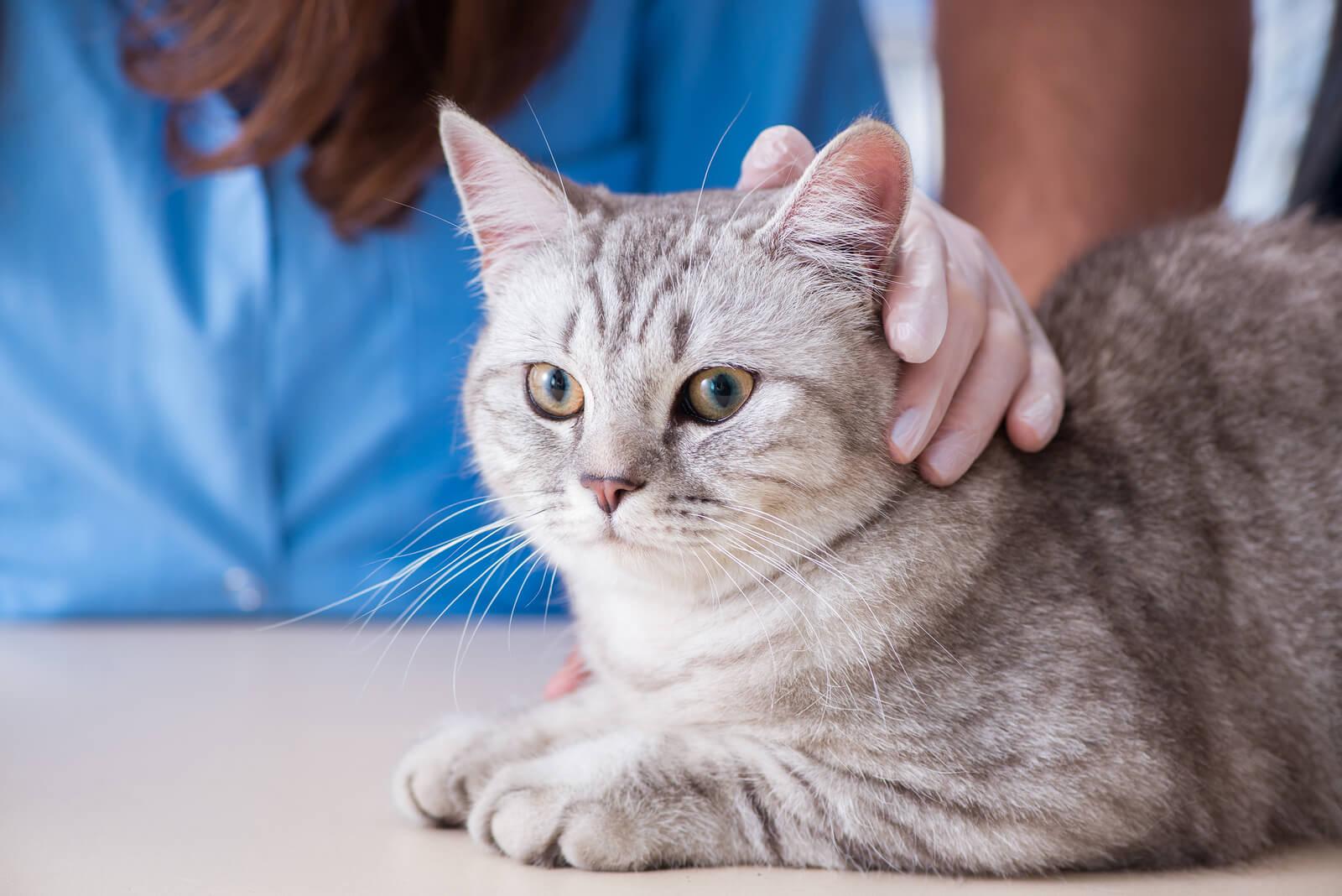 cat-leukemia-virus