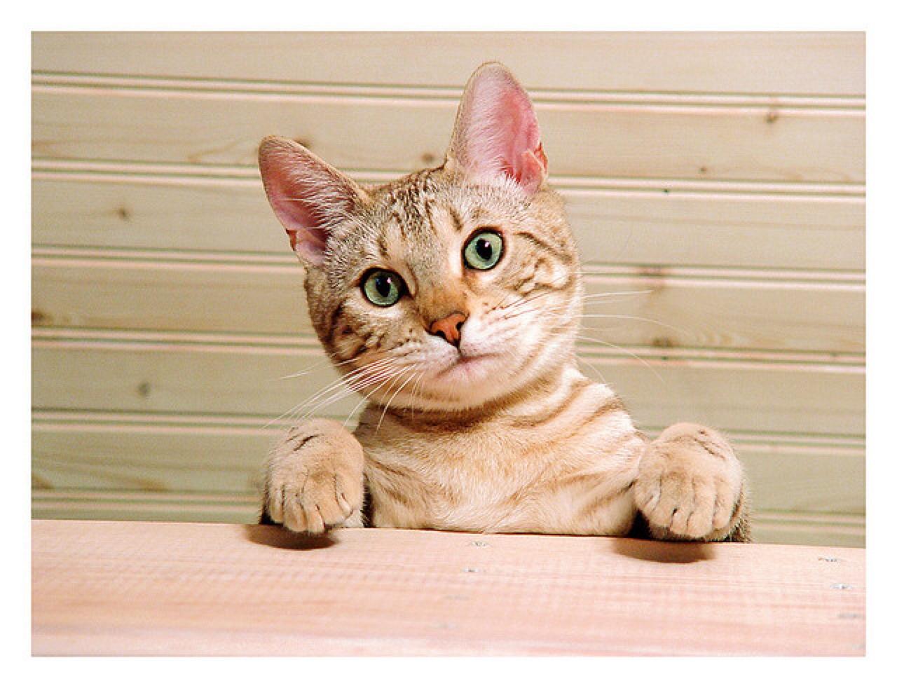 cat-injury