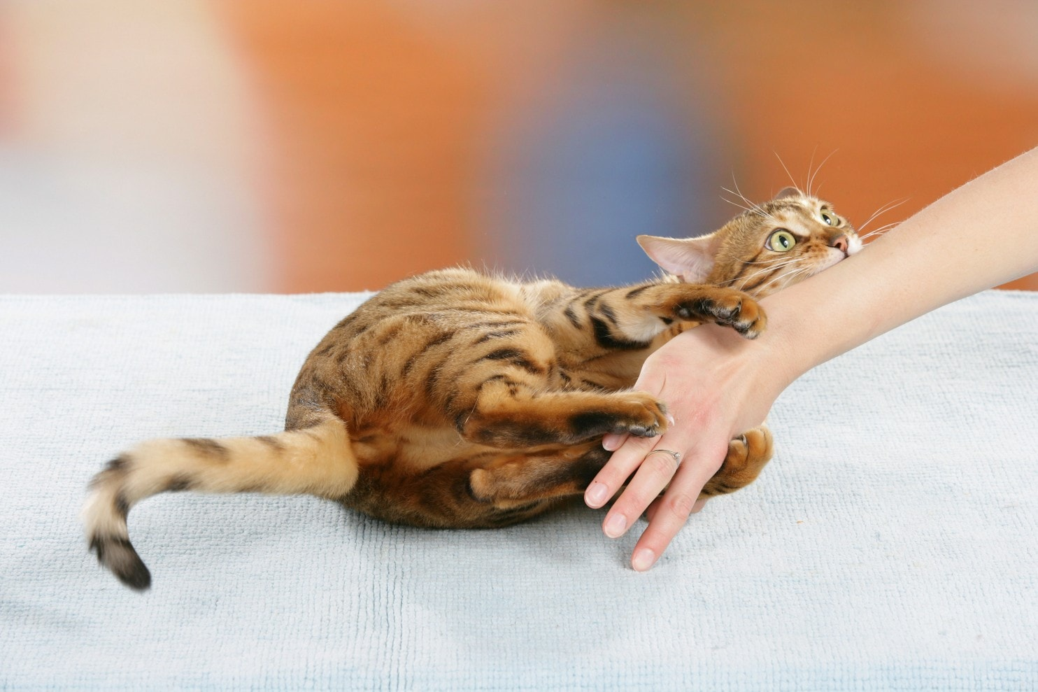cat-makes-dangerous