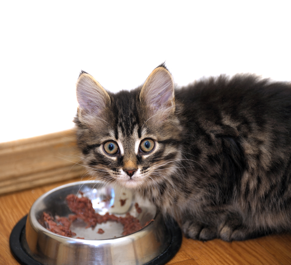 cat-nutrition-guide