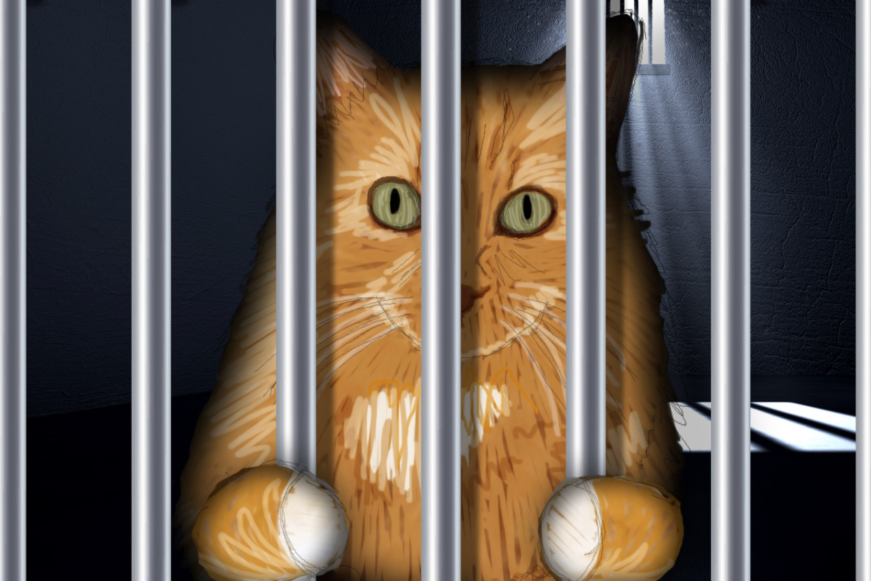 Cats-Stop-repeat-offenders
