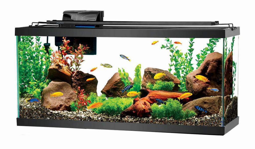 Aquarium-Fish