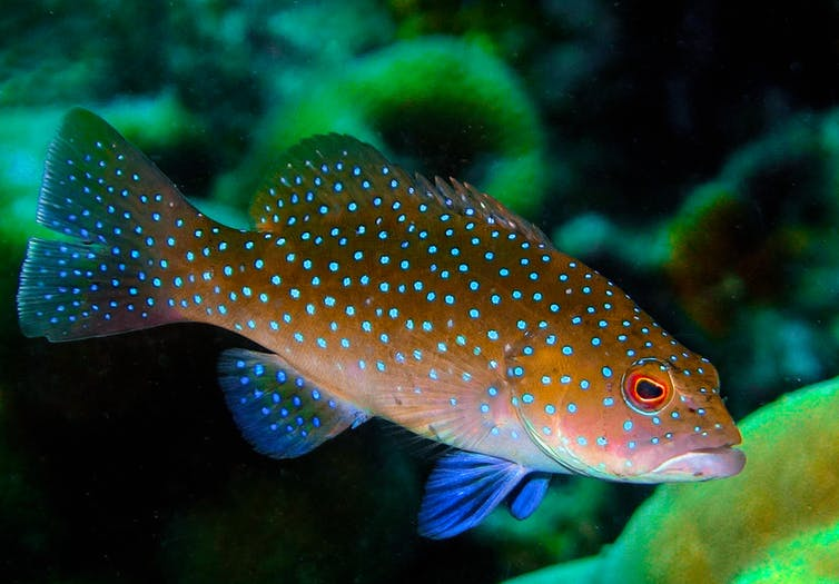 fish-care