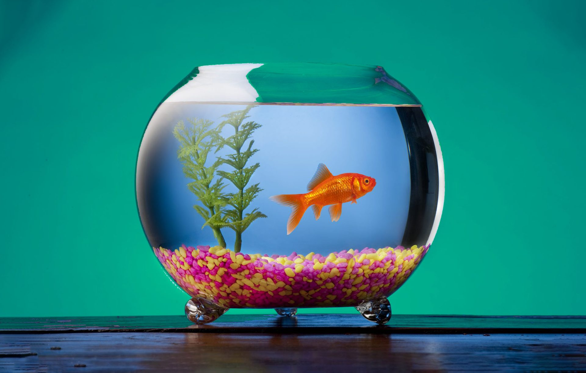 Cheap-Fish-Tank