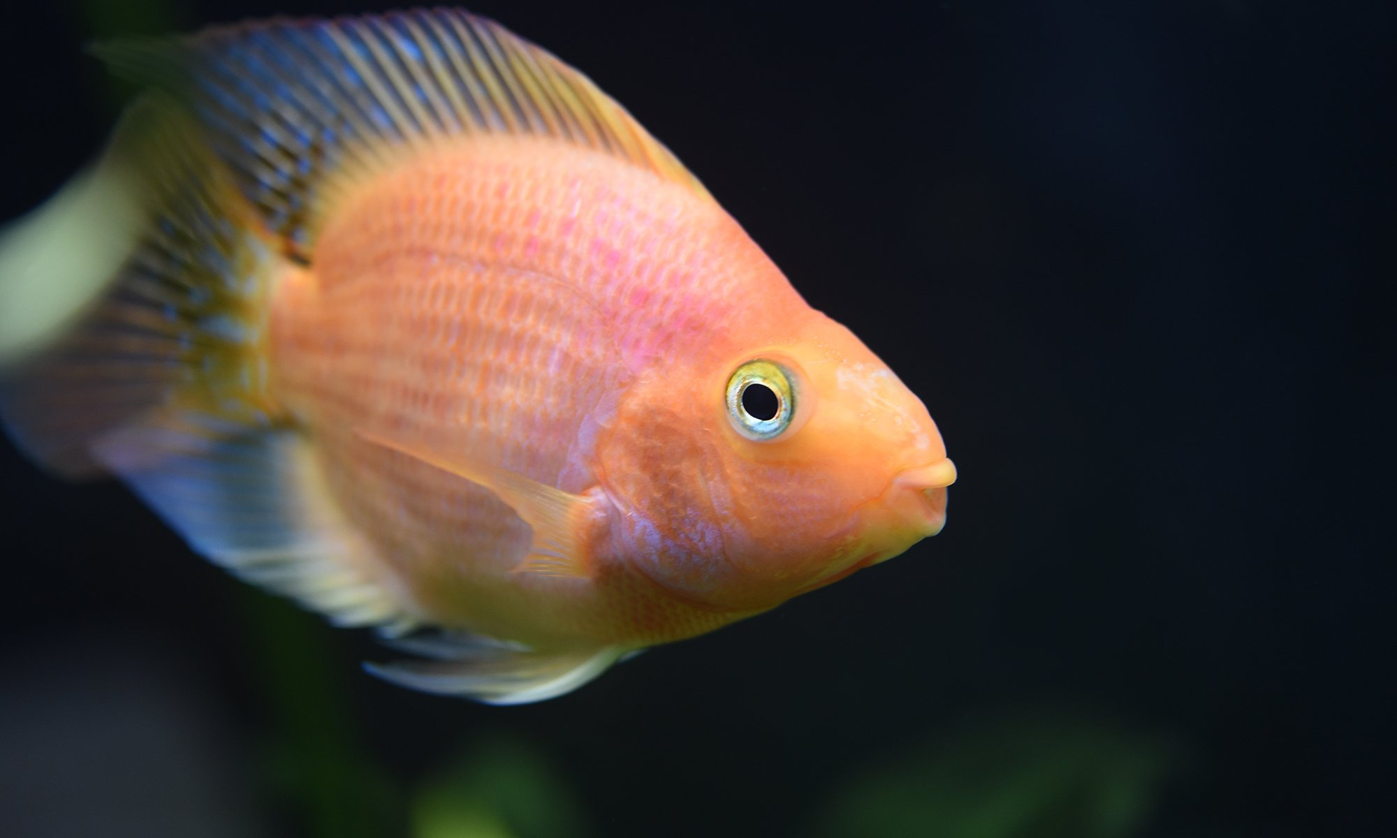 how-to-take-care-of-a-fish
