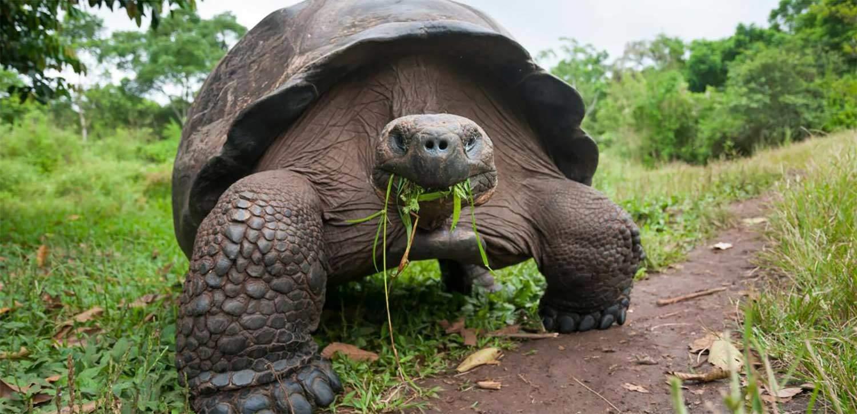 galapagos-tortoise-pet