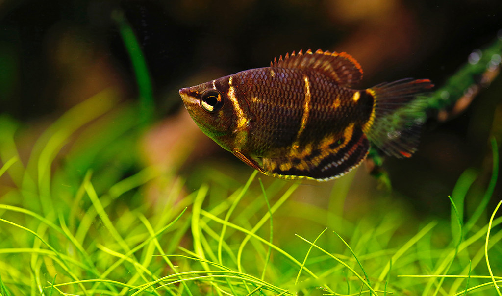 gerorge-chocolate-fish