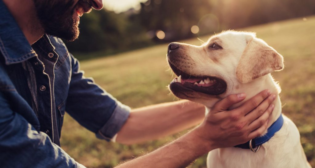 health-seizures-in-dog