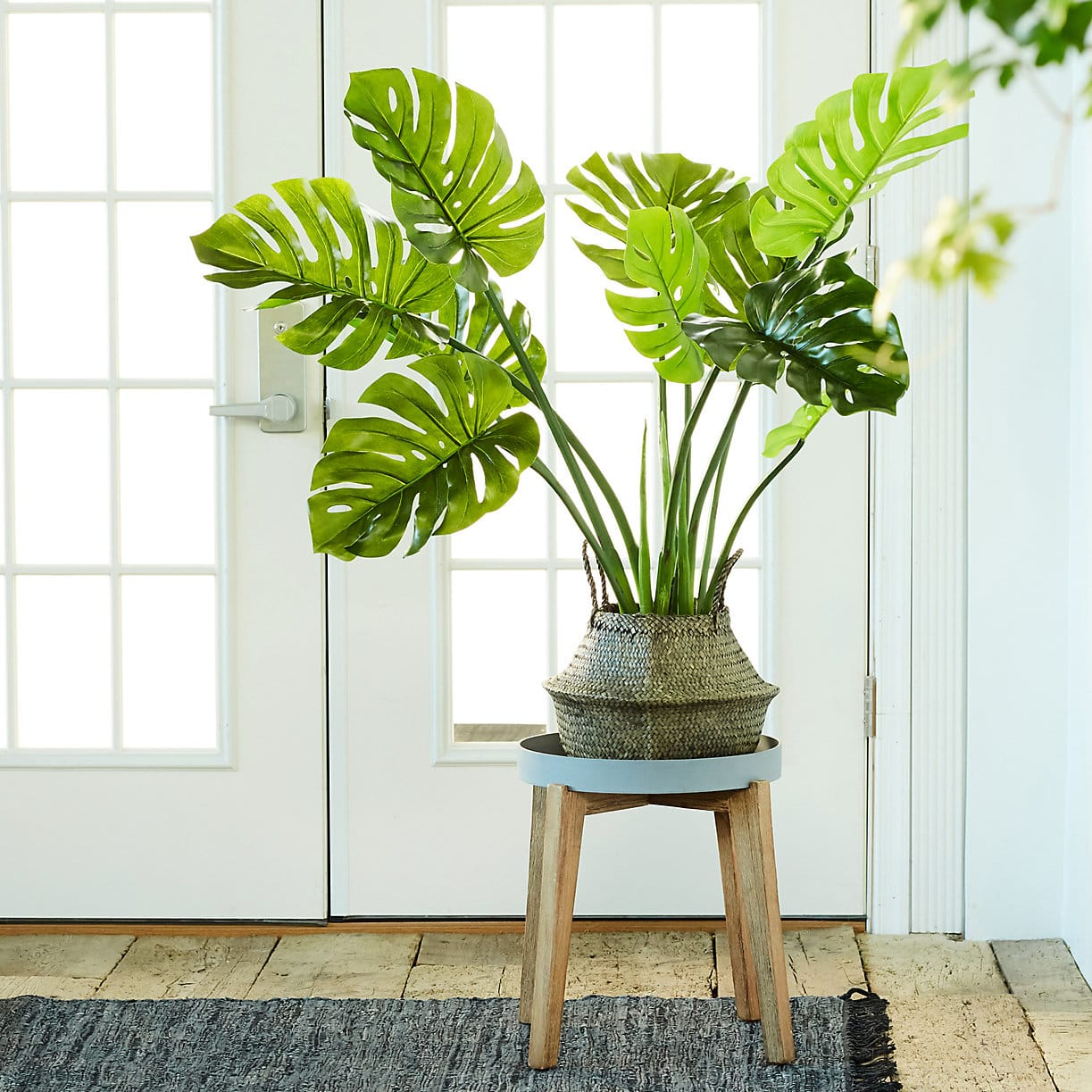 plastic-plants