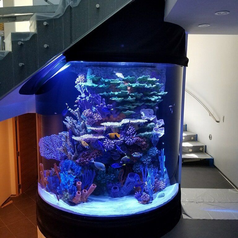 fish-tank-for-sale