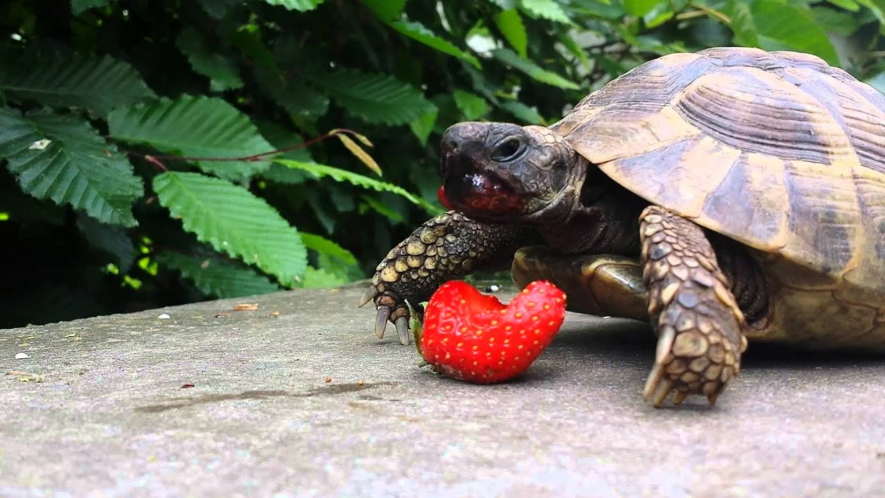 What-Do-Turtles-Eat