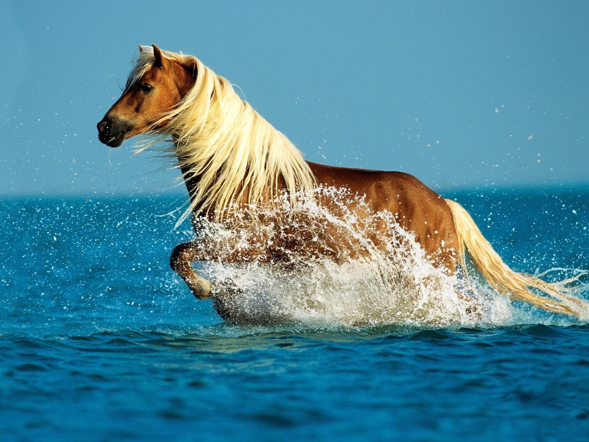 The Palomino Horse Breeds History Origin Cost 2020