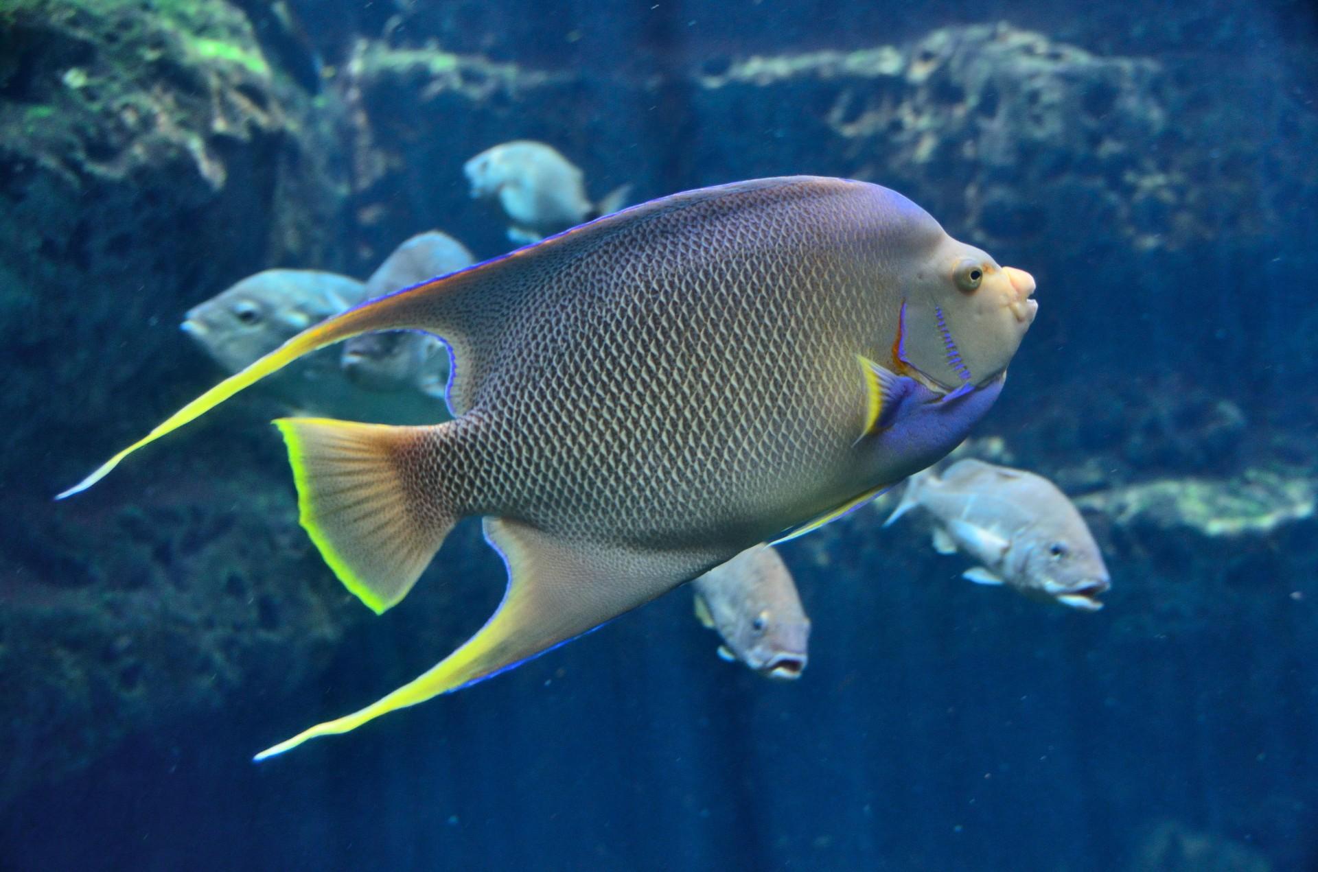 Saltwater-Fish-tank