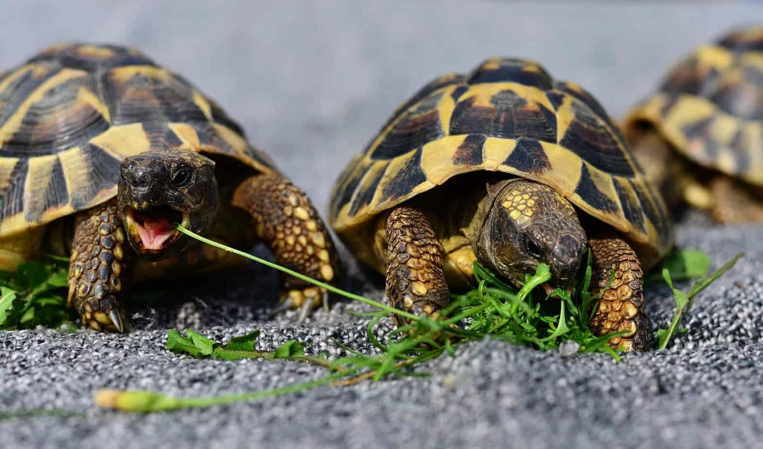 turtles-health