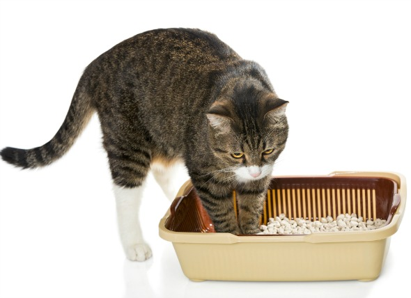 urinary-problems-with-cats
