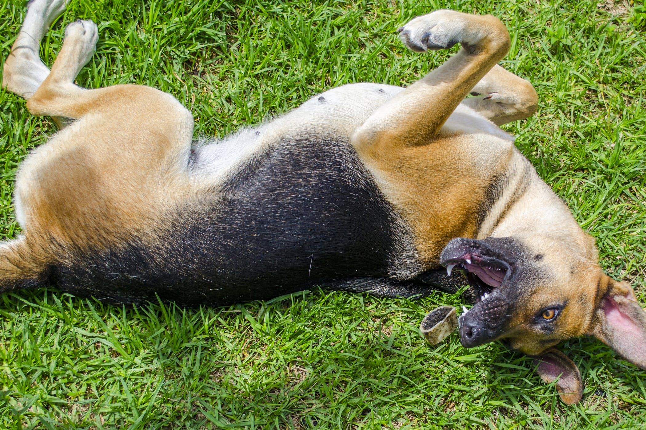why-is-my-dog-having-seizures