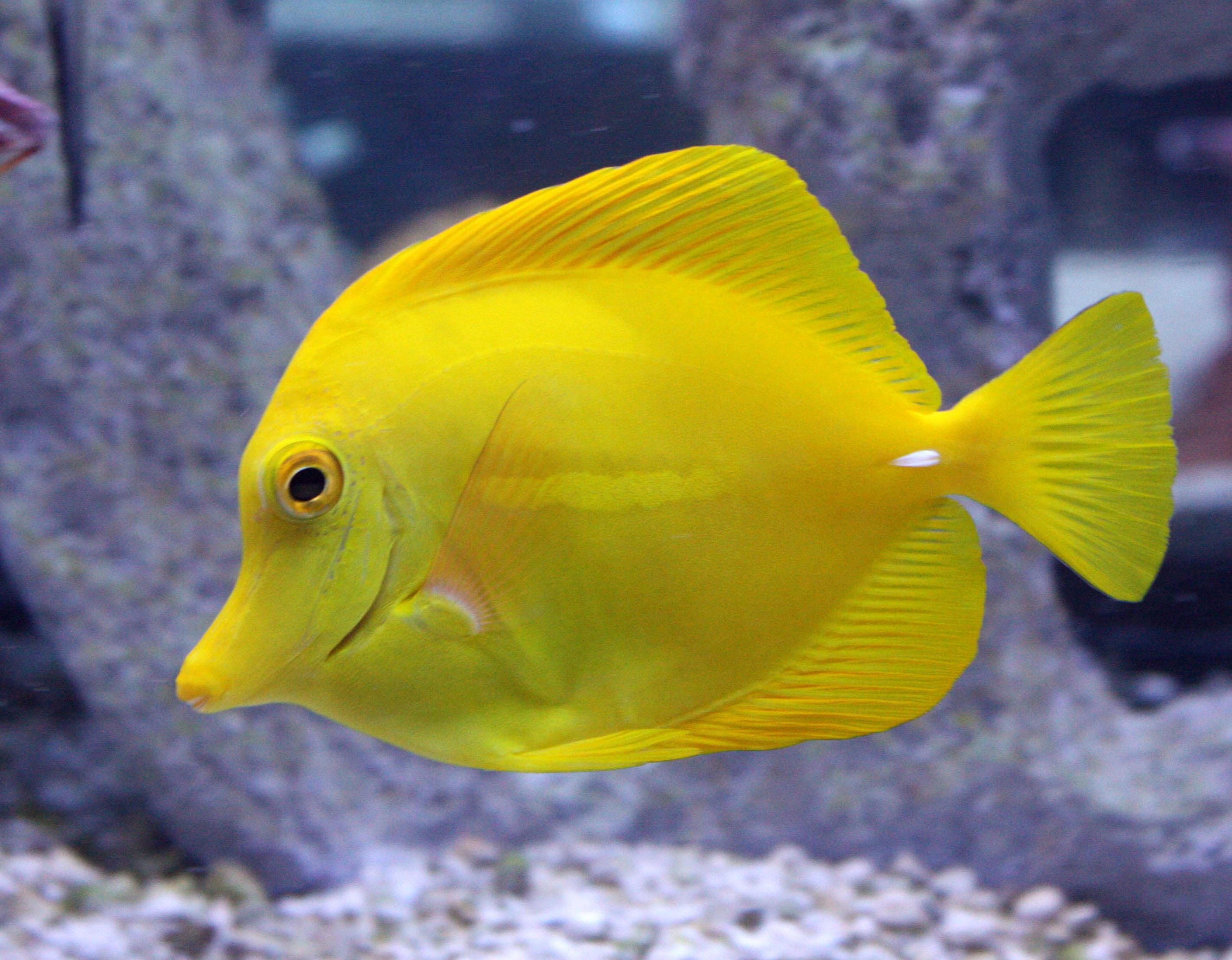 Schooling-Tropical-fish
